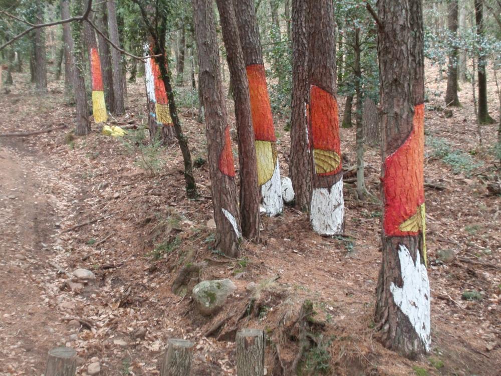 Bosque de Poblet (Tarragona) (2/6)
