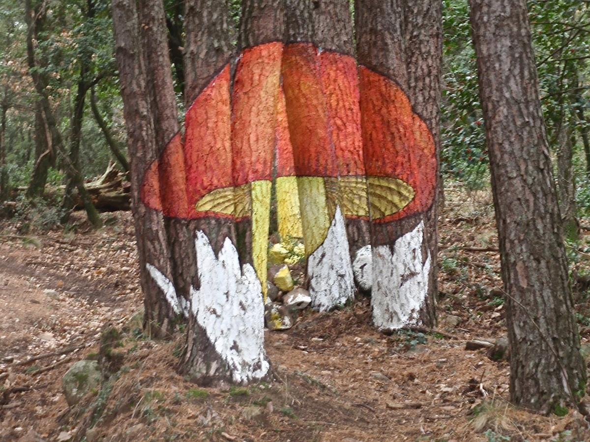 Bosque de Poblet (Tarragona)