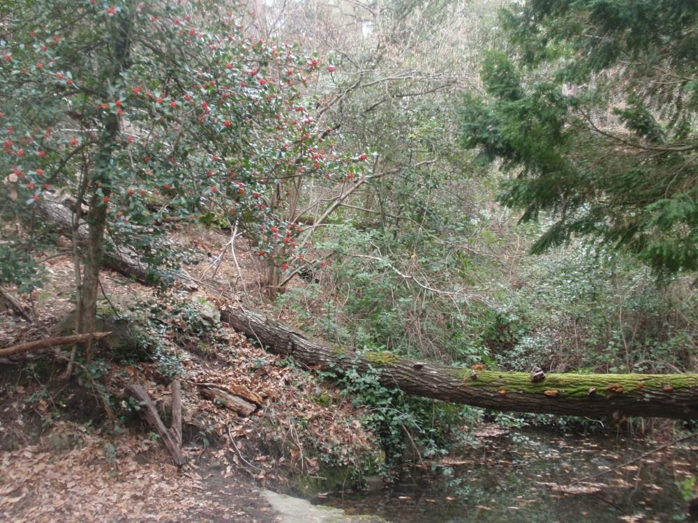 Bosque de Poblet (Tarragona) (6/6)