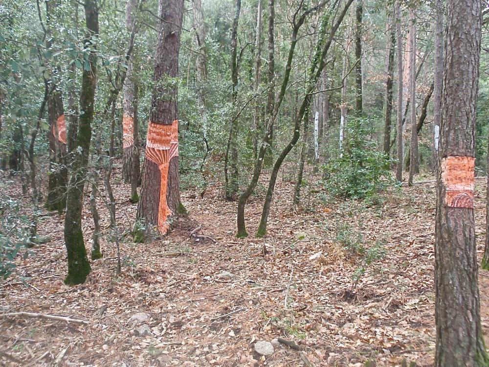 Bosque de Poblet (Tarragona) (5/6)