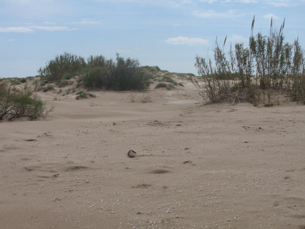 Excursión por el Delta del Ebro (2/5)