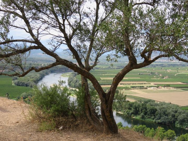 Excursión a Tivissa, Miravet, Tortosa y Pinell deBrai