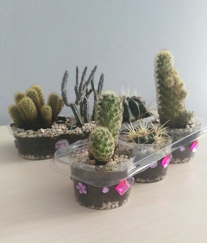 Maceta de cactus, reciclandoplásticos
