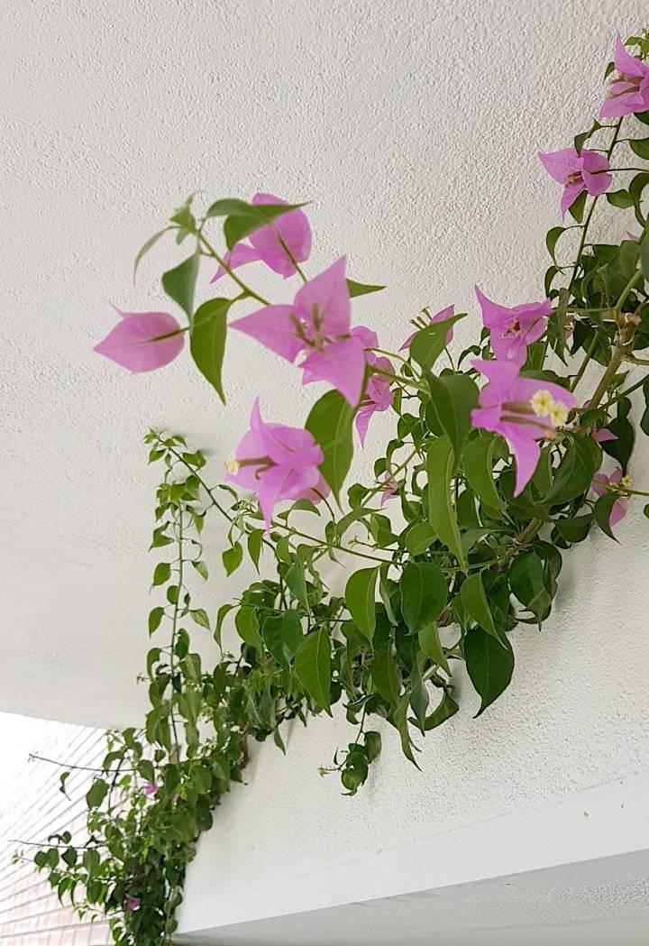 Como preparar tus plantas para poner a punto la terraza o balcón enprimavera