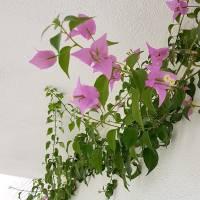 Como preparar tus plantas para poner a punto la terraza o balcón en primavera
