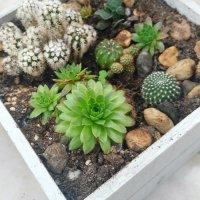 Como crear un macetero de madera para cactus y suculentas
